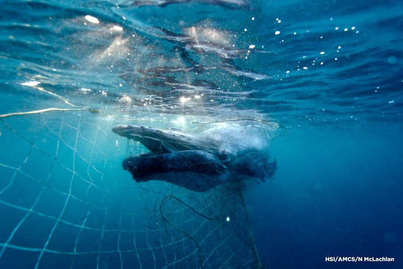 Why do we still use shark nets in Australia?
