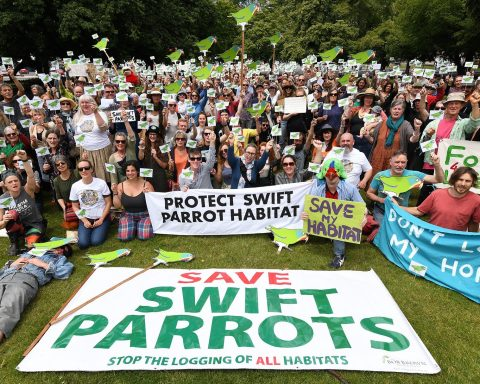 Swift parrot rally in Hobart