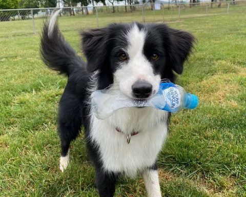 Dog with Mount Franklin water bottle in mouth