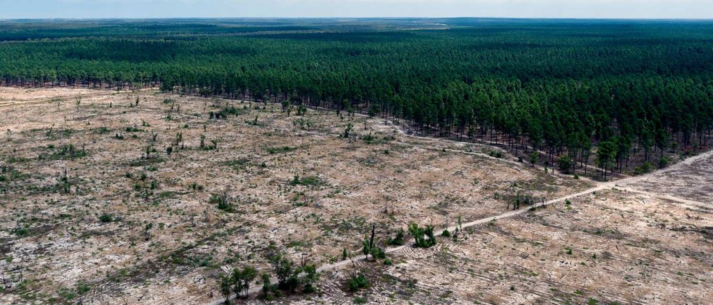 Large forest with significant portion cut down