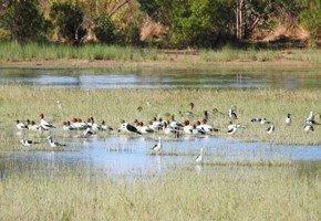 Menindee lakes with birds