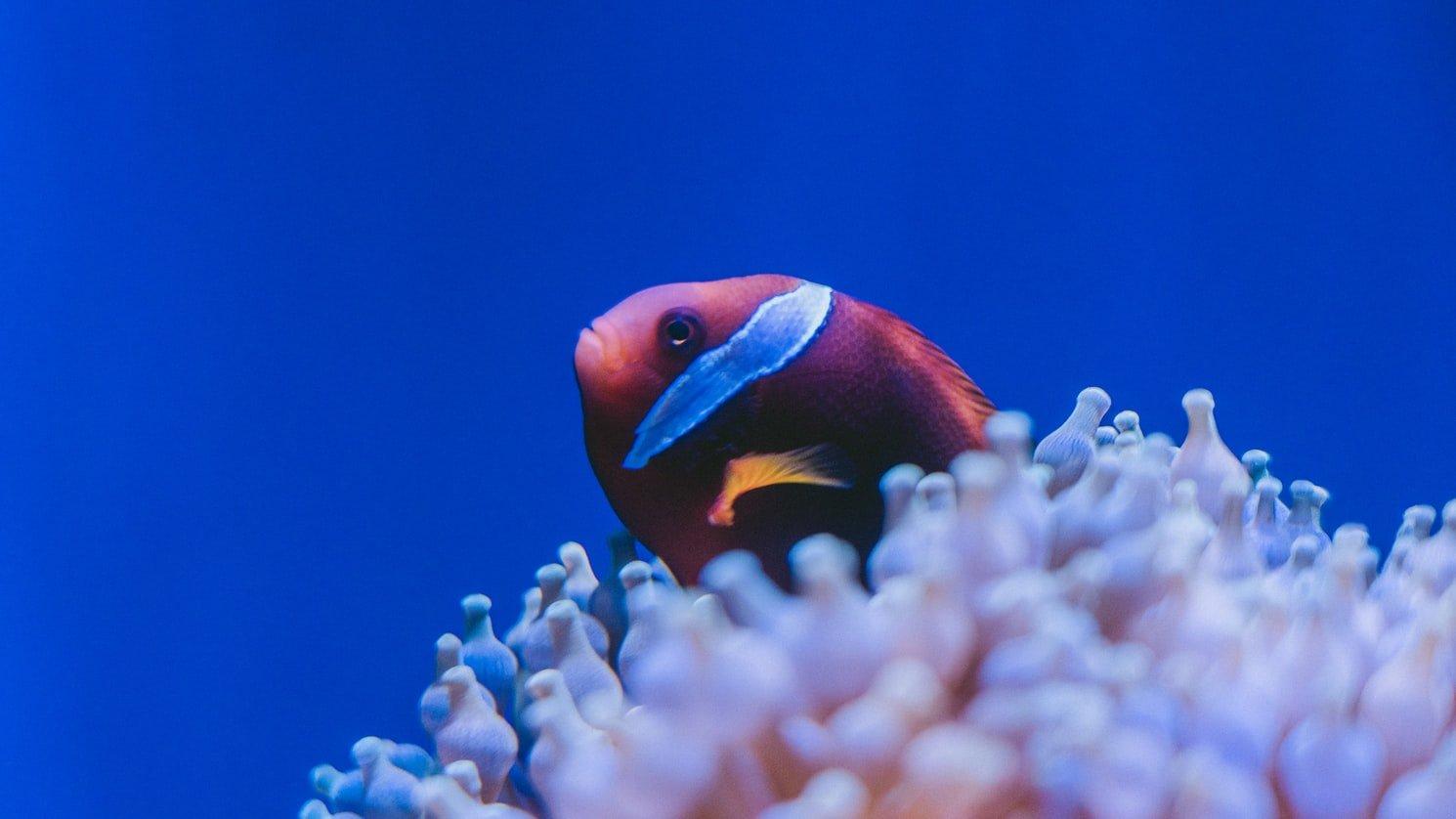 Exotic fish behind coral